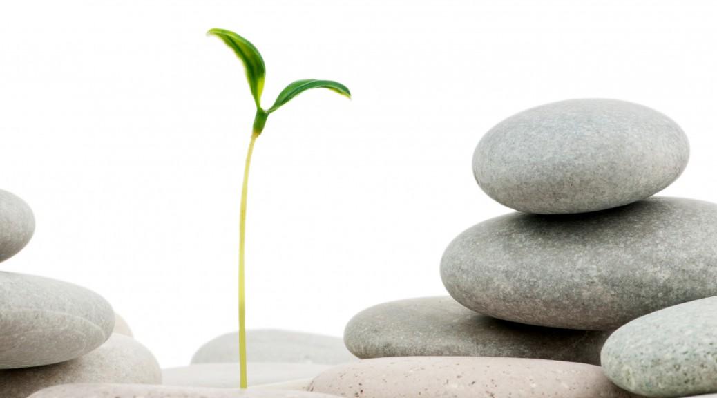 Pebbles and seedlings   alternative medicine concept